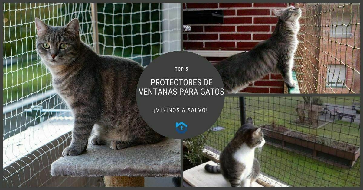 Increíbles protectores de ventanas para gatos